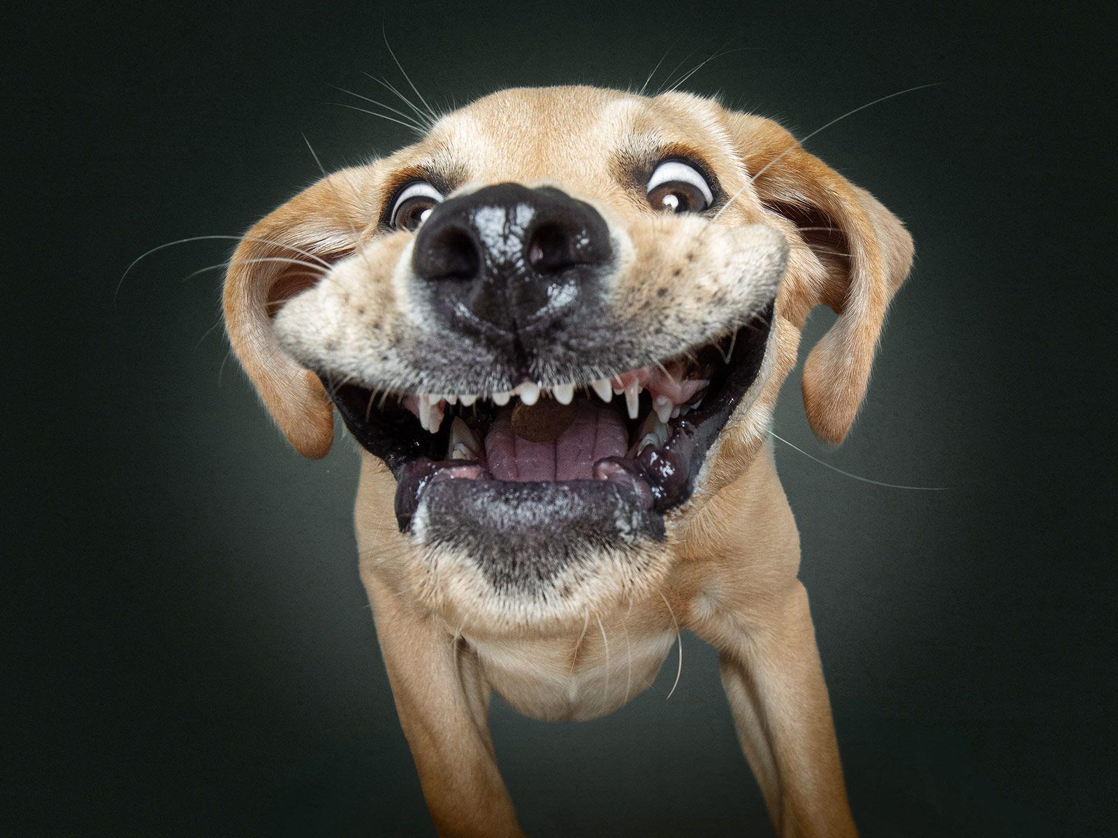 смородины фото приколы животных смешные до слез очень приведите себя