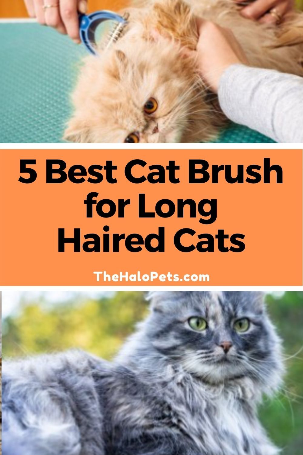 ccb5d990fa8473d2bf185f181c157b25 - How To Get Knots Out Of A Long Haired Cat