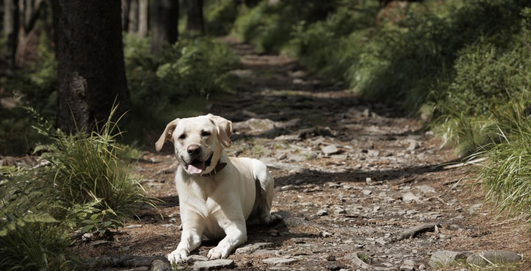10 amazing offleash dog hikes that aren't on the North