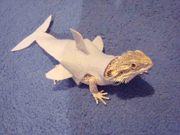 21 Reasons You Need To Start Hanging Out With Bearded Dragons