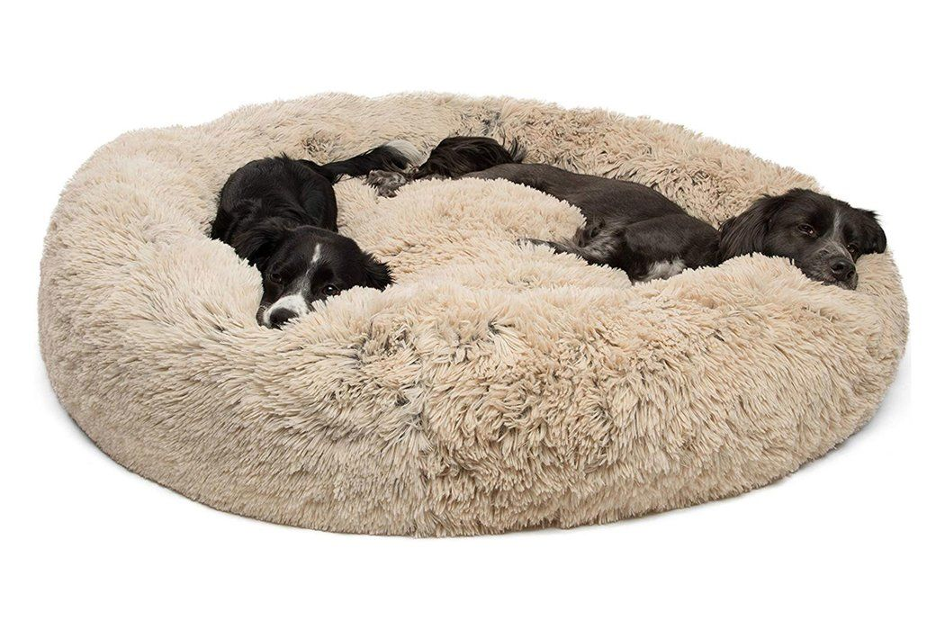 8 Insanely Popular Dog Beds With Thousands of Rave Reviews