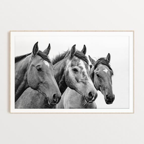 Photo of Horses Printable, Black and White Horse Wall Art Animal Photography Instant Download Horses Wall Decor