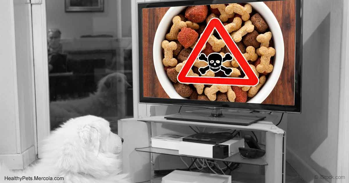 It S Beyond Most People S Imagination But These Pet Foods Were Found To Contain Disastrously High Levels Innovative Pet Products Food Animals Pet Food Dishes