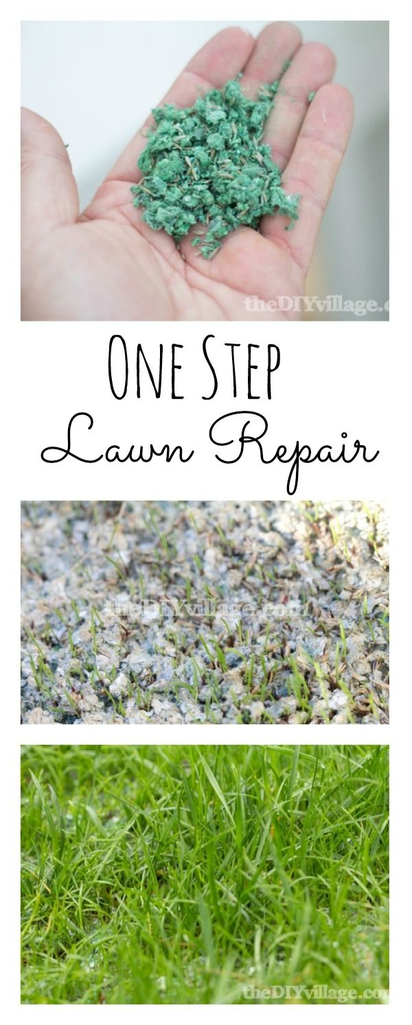 Lawn repair with pennington step complete lawn repair lawn and