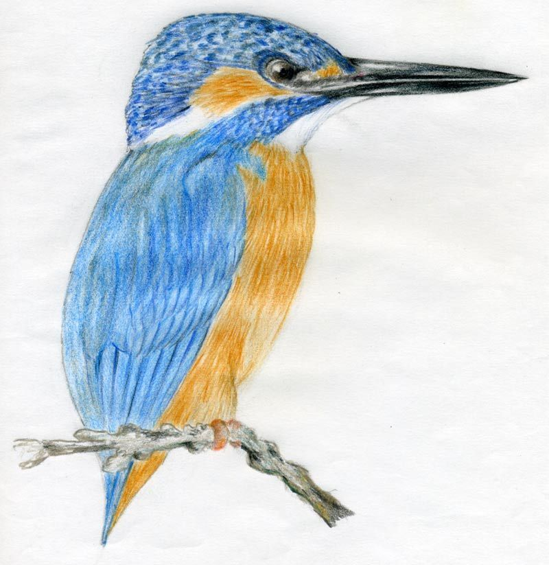 Most Famous Paintings Of Bee Eater Birds