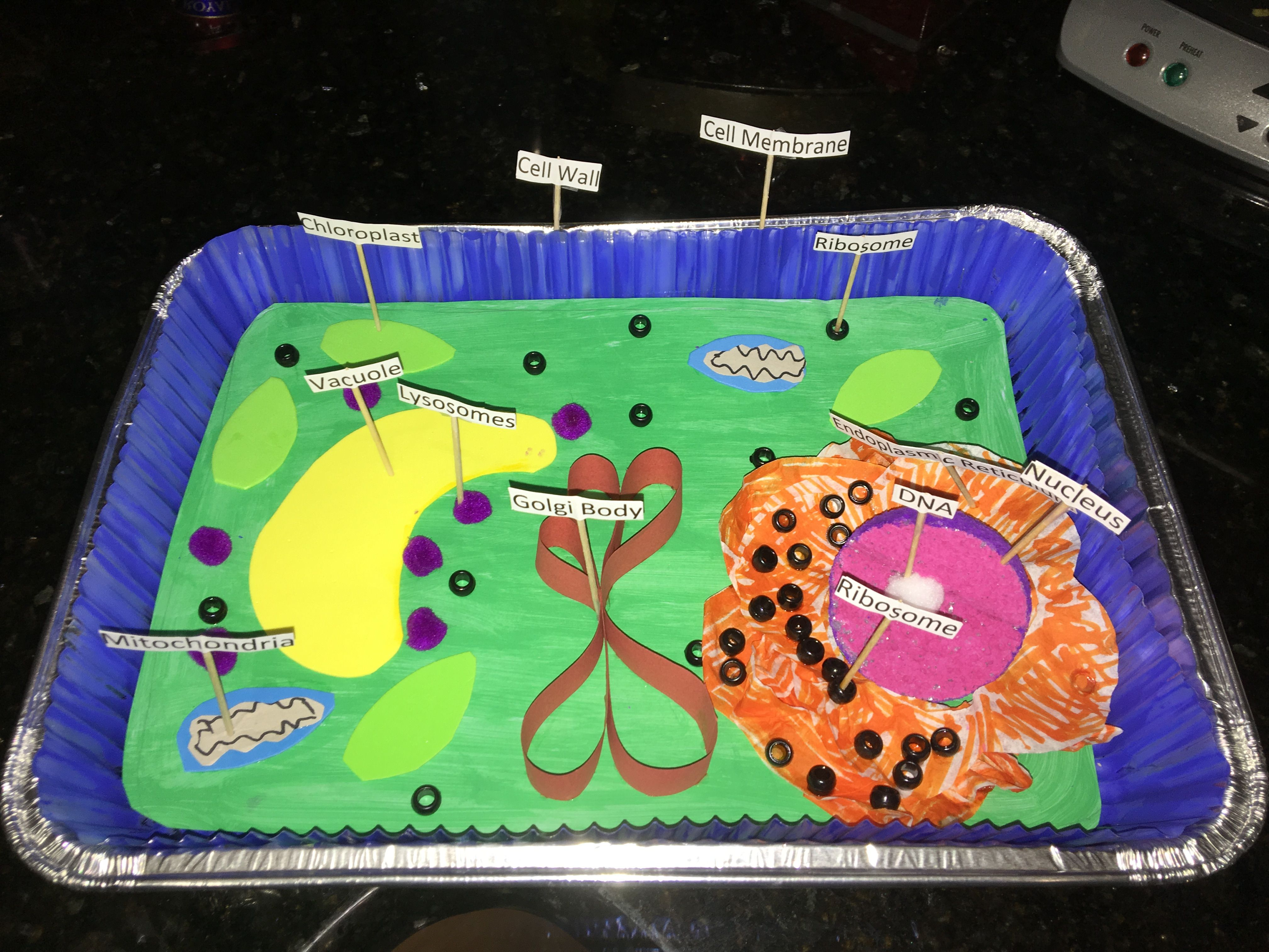 3d plant cell model project materials - 3 D Plant Cell
