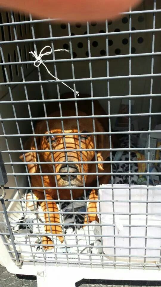 Ruby Just Arrives At Heathrow From The Usa Next Stop Swindon Pet Taxi Pets Fictional Characters