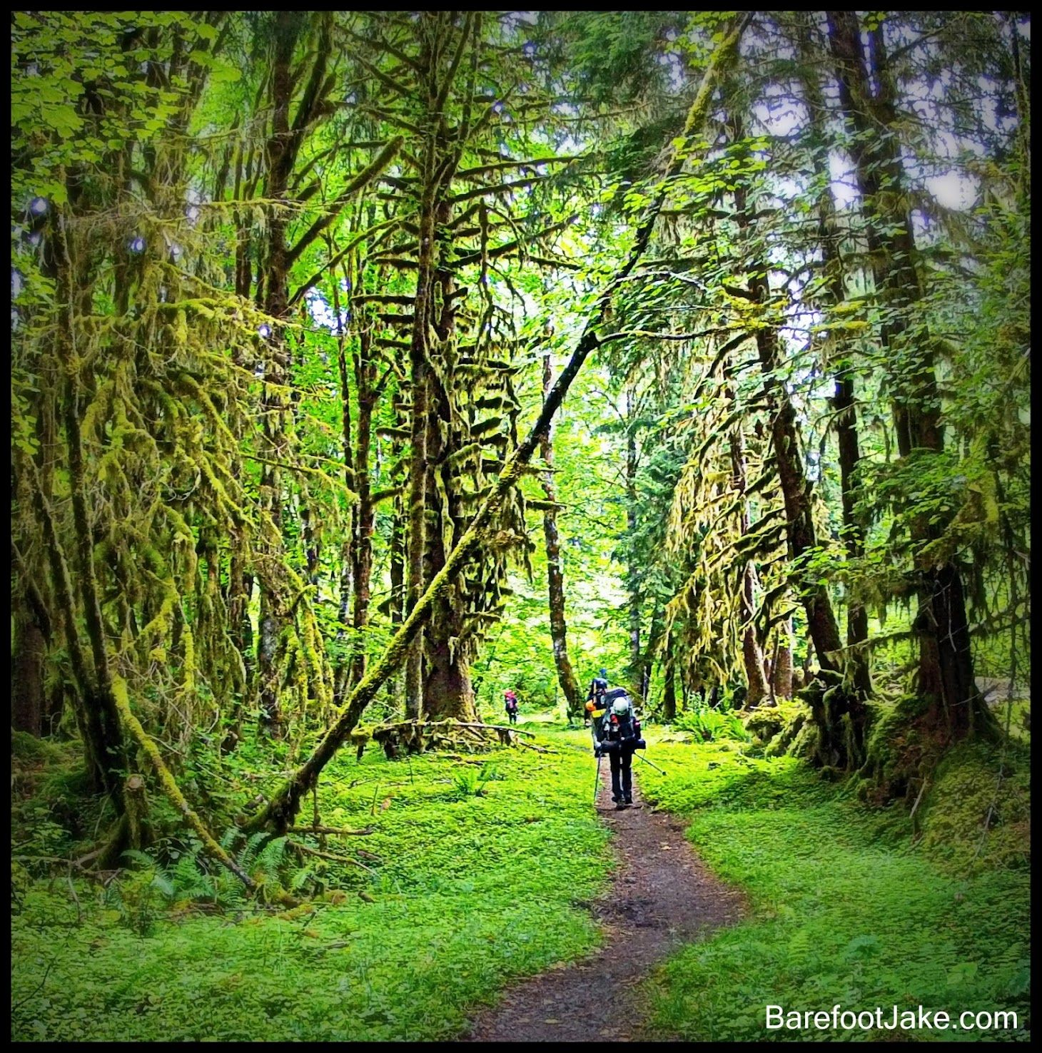 Warriors Path State Park Campground: Hoh River Trail: 3 Day Hike Olympic National Park
