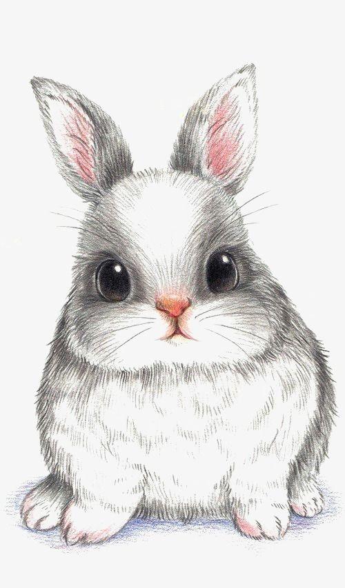Rabbit, Hand Painted Rabbit, Cartoon Rabbit PNG Tr