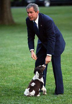 George W Bush And Spot Fetcher The English Springer Spaniel
