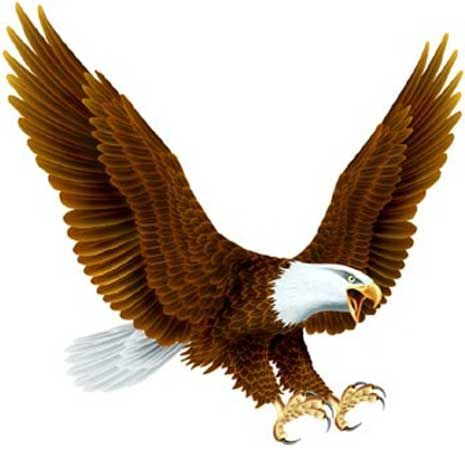 Pin By Paola Yanakieva On Forever Living Products Bald Eagle Birds