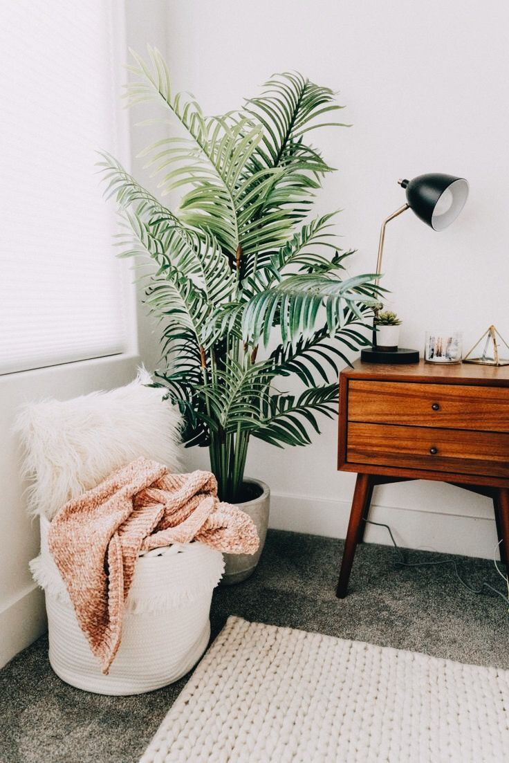 Cozy Living Room Indoor Plants Palm Leaves Interior Design Home Decor Home Decor