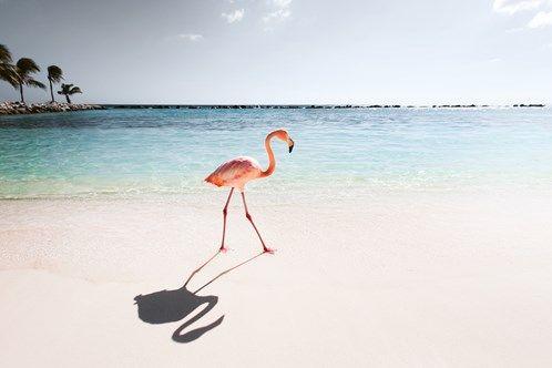 Claire Droppert . Pink paradise