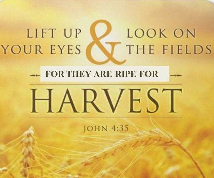 Lift up your eyes and look on the fields! They are ripe ...