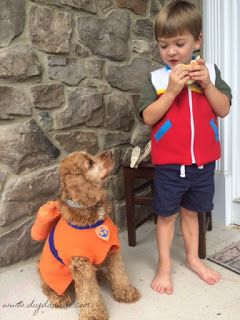 My dog posing with my son in their matching DIY Paw Patrol inspired costumes .  sc 1 st  Pinterest & Paw Patrol Dog Costume: Zuma | Pinterest | Paw patrol Costumes and ...