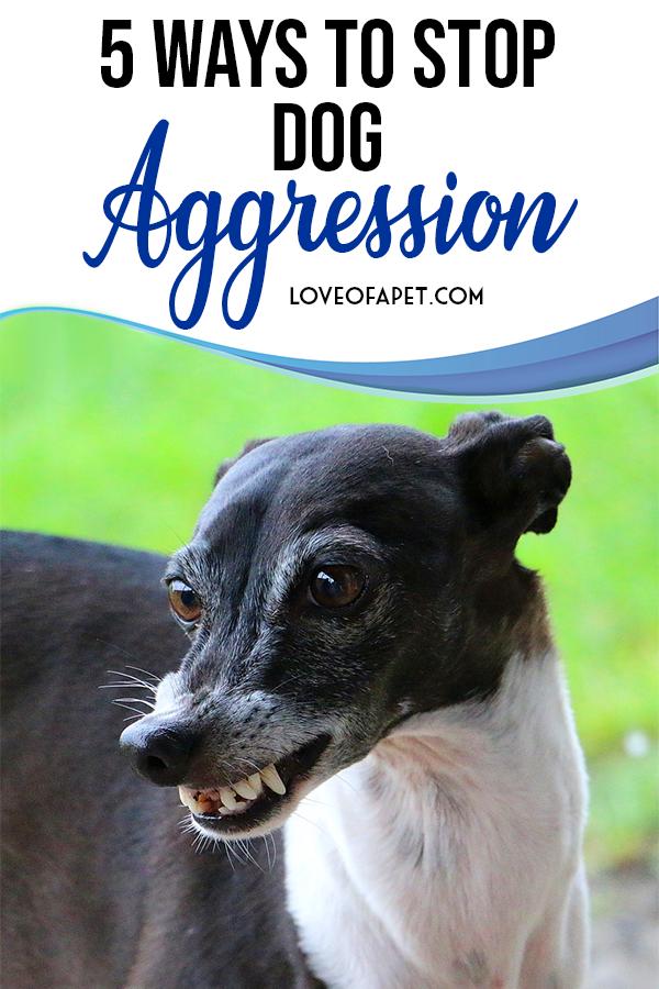 ccbd6bb6ff151481fbc96f2e3a0c8a0d - How To Get A Dog To Stop Aggressive Biting