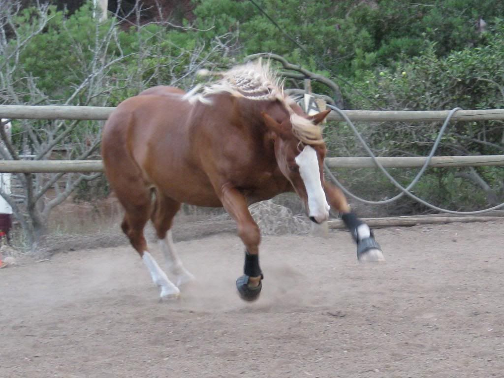 My first horse was a Quarter Horse cross, we figured with a ...