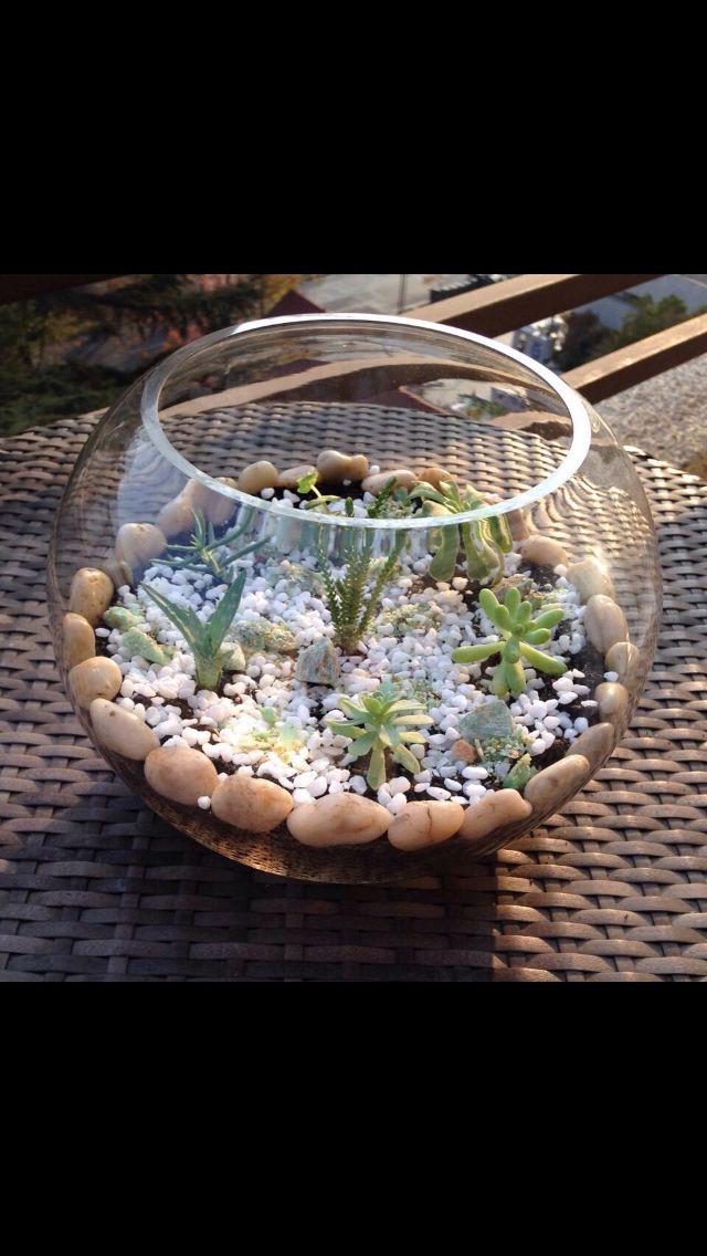 Lindas peceras decorada con suculentas terrarios - Peceras pequenas decoradas ...
