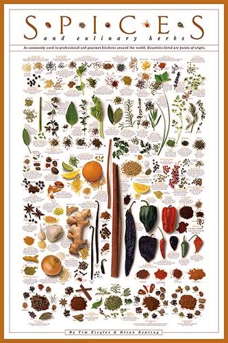 Spices and Culinary Herbs Wall Chart Poster by Tim Ziegler