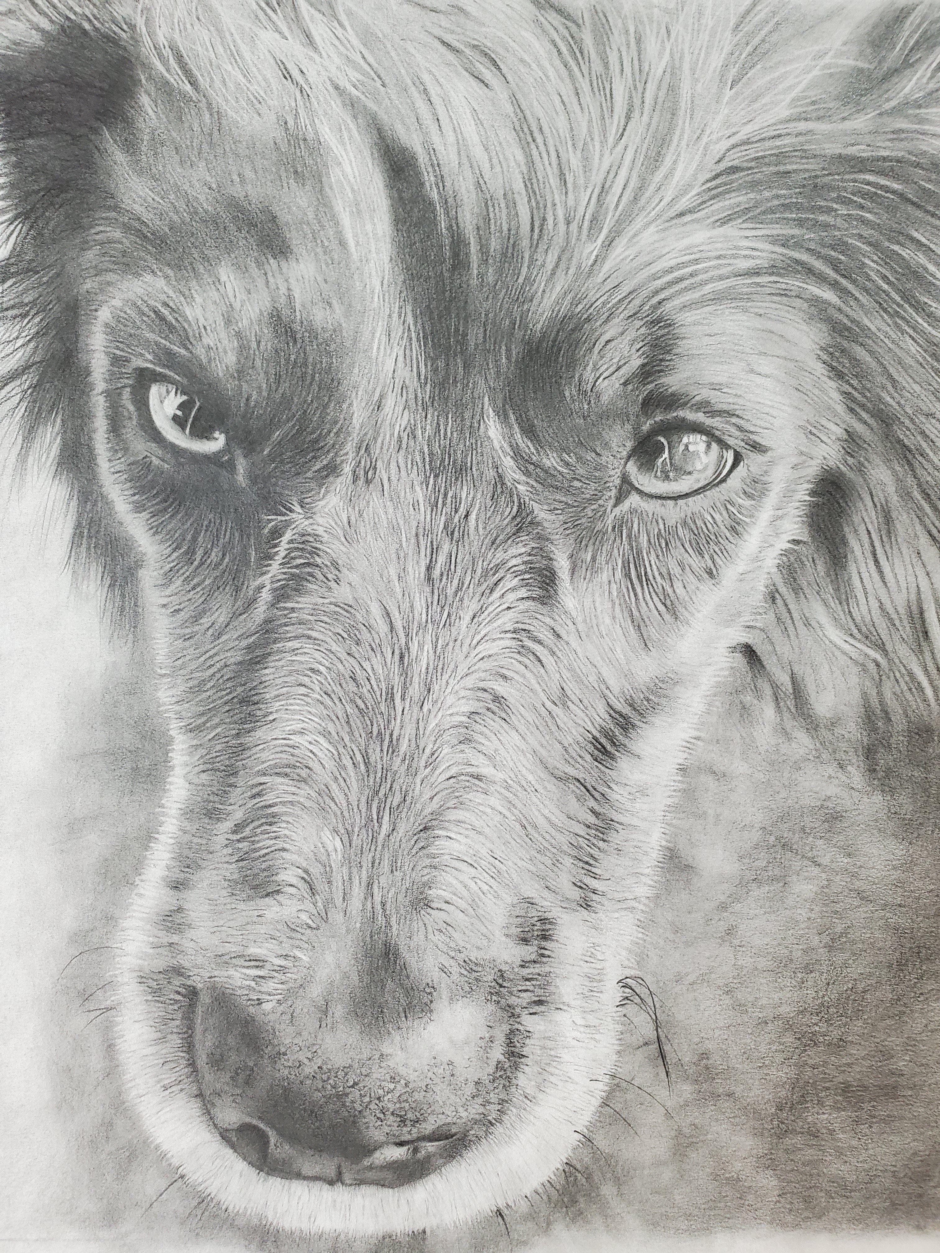 Photo of Graphite/Pencil Hand Drawn Pet Portrait