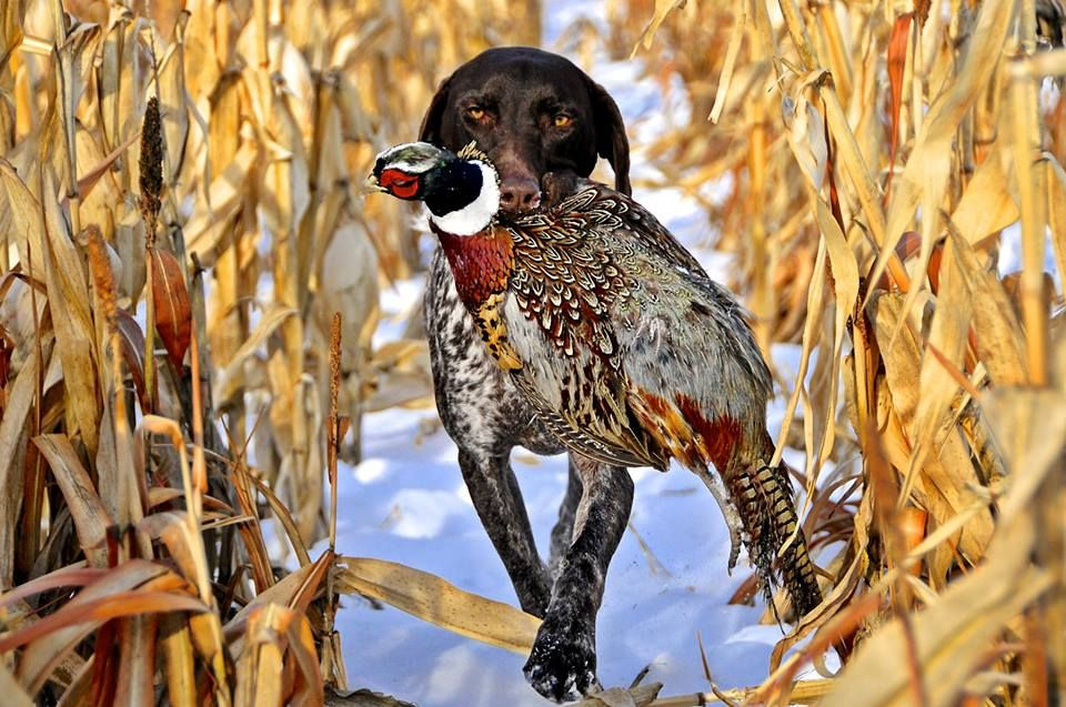 Pin By James Ince On Dog Hunting Dogs Hunting Hunting Pictures