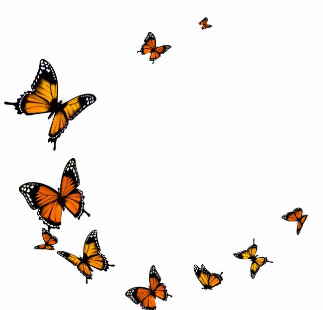 View And Download High Resolution Flying Butterfly Png Transparent Image Transparent Background Butte Butterflies Flying Butterfly Gif Transparent Background