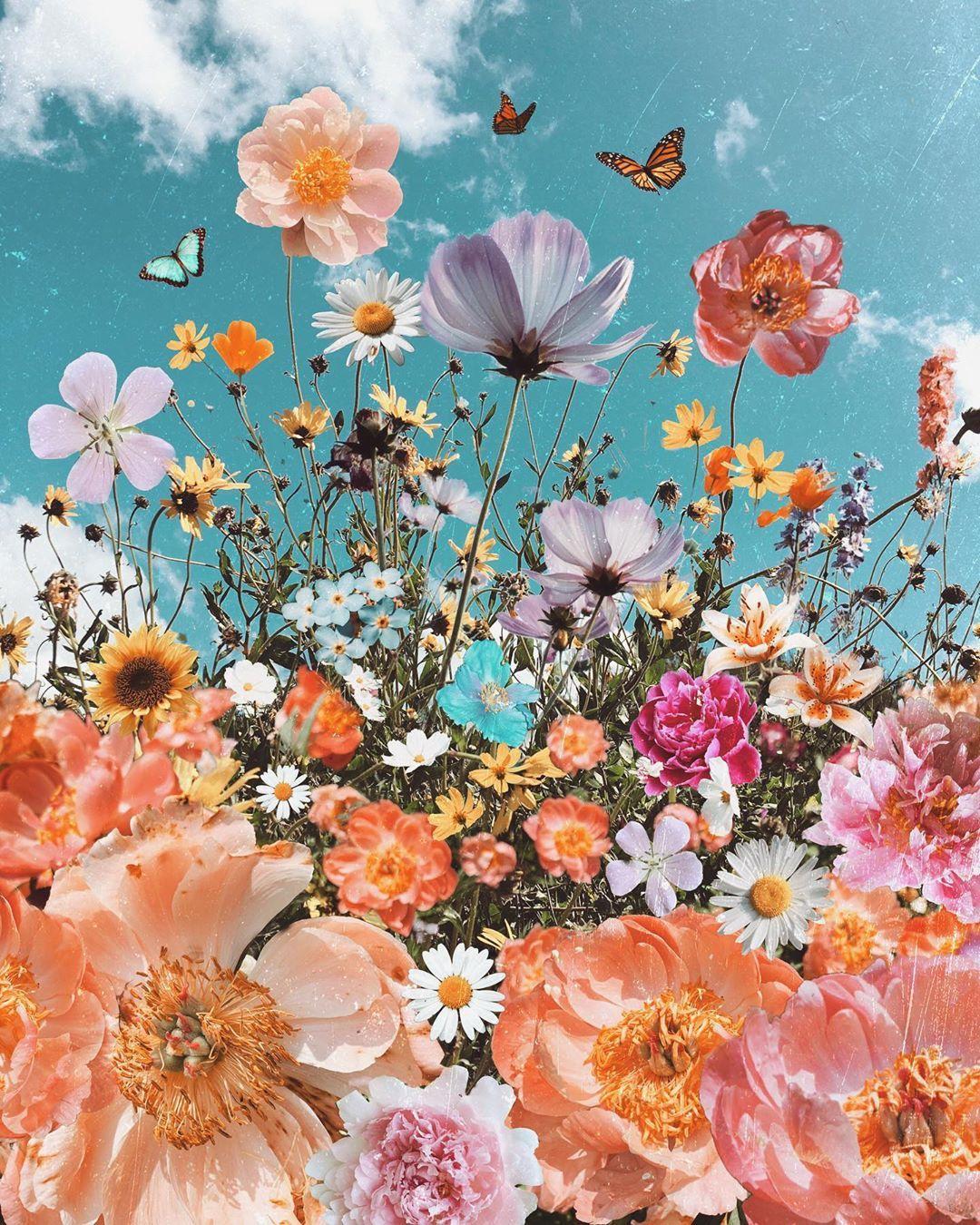 odwyer_sio9 Flower wallpaper, Iphone wallpaper vsco