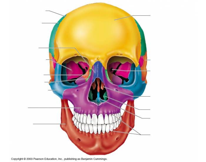 This is a quiz called Anterior Skull. Cool game to help you study ...