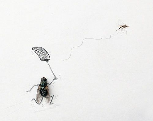 The mosquito hunt by Magnus Muhr