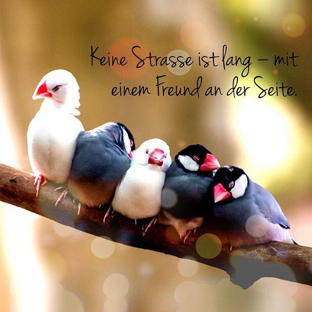Keine Straße Ist Lang U2013 Mit Einem Freund An Der Seite.  #japanischessprichwort #vögel