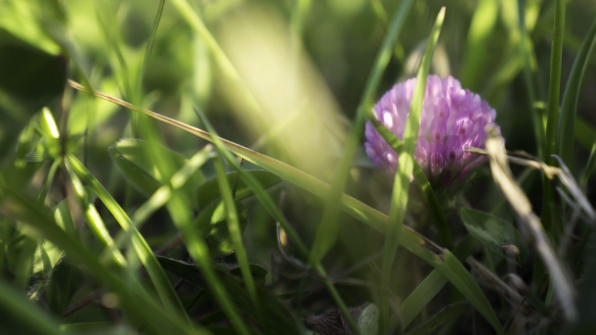#insectos #flores #Uruguay