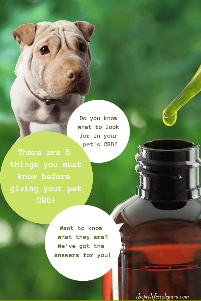 There Are 5 Things You Should Know Before Giving Your Dog Cbd We List Them Out For You The Pet Lifestyle Guru Pet Meds Dog Wellness Pet Wellness