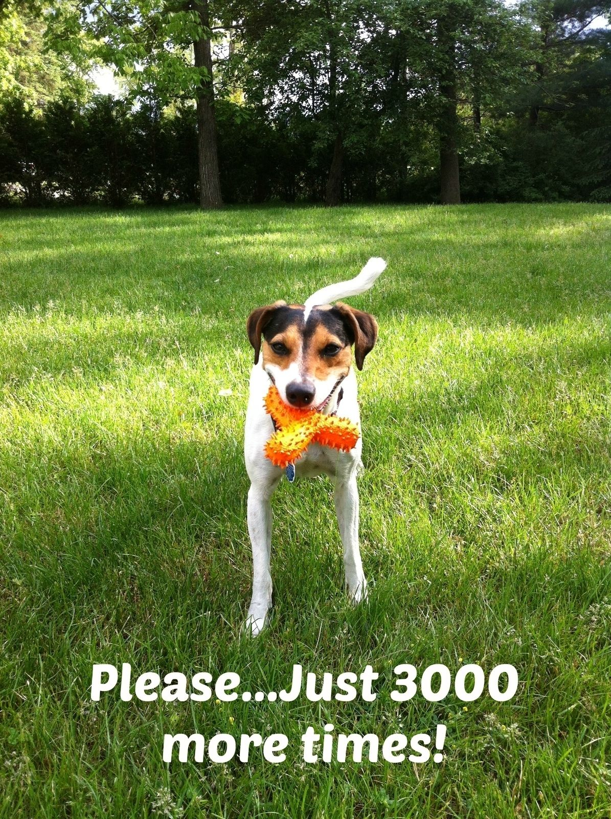 Just 3000 more times!   #dogs #canine #pets #quotes #animals  #radiopet #dogfencing  Created by:  www.radiopet.ca