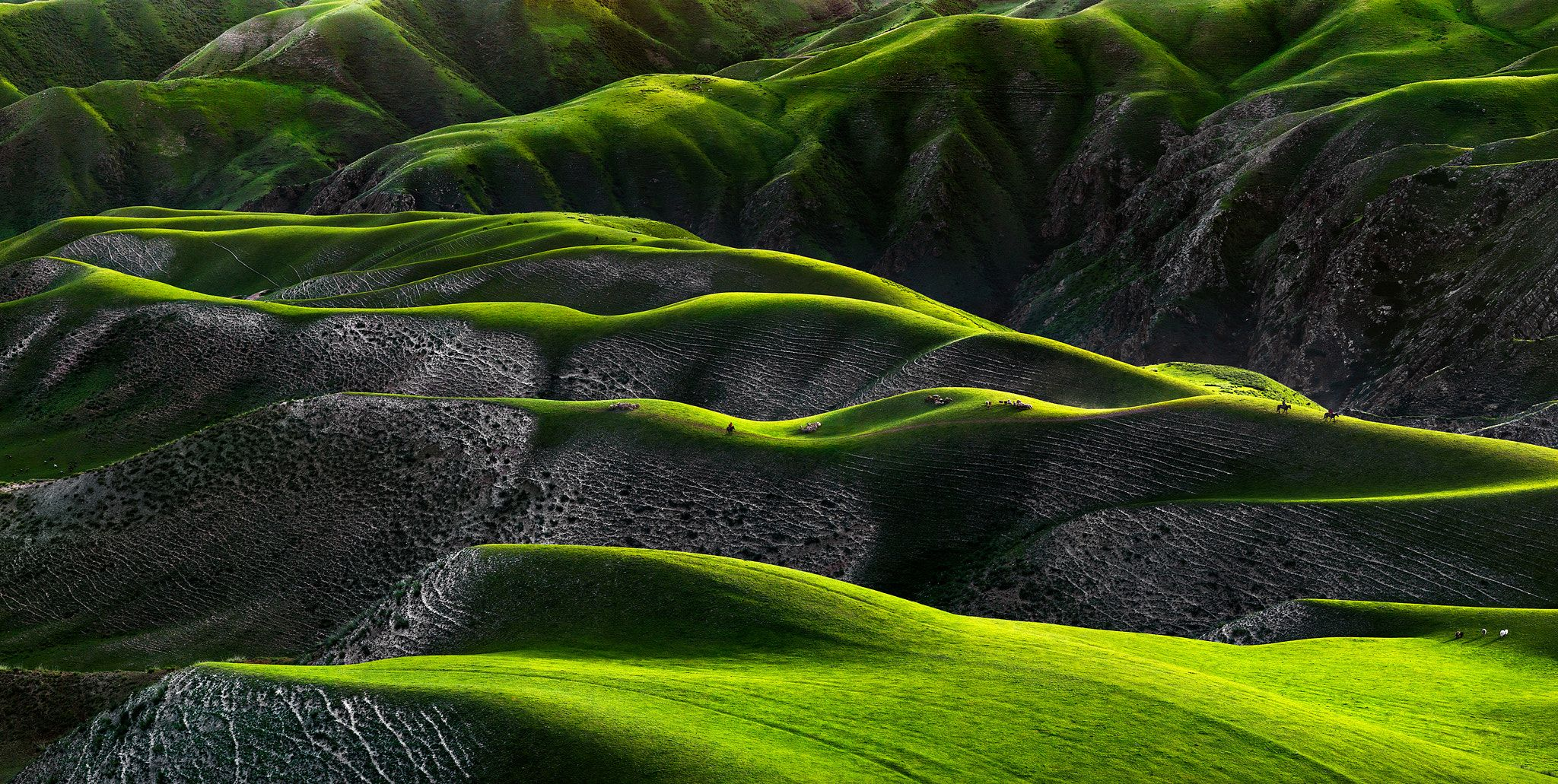 Grassland of human body curves - Regarding this image  it a beautiful  and unique patterns  of grassland  and if you look closely you will see human body curves and it's just awesome . China is famous for it  Grassland  in inner Mongolia  but Xinjiang have the mot spectacular patterns  of grassland  I have seen  and to capture it with the perfect light and  story  was amazing but let me explain to you what really I have to do to captured this image . First I have to fly from my home in…