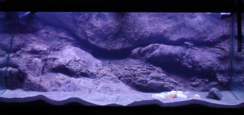 Pin By Designs By Nature Aquarium Bac On Aquarium And Terrarium Ideas Cichlid Aquarium 30 Gallon Fish Tank Fish Tank