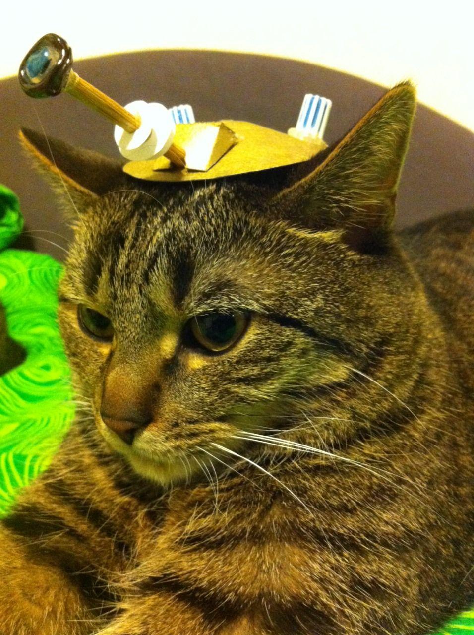 Dalek cat ThinkGeek Doctor Who Pinterest Cats
