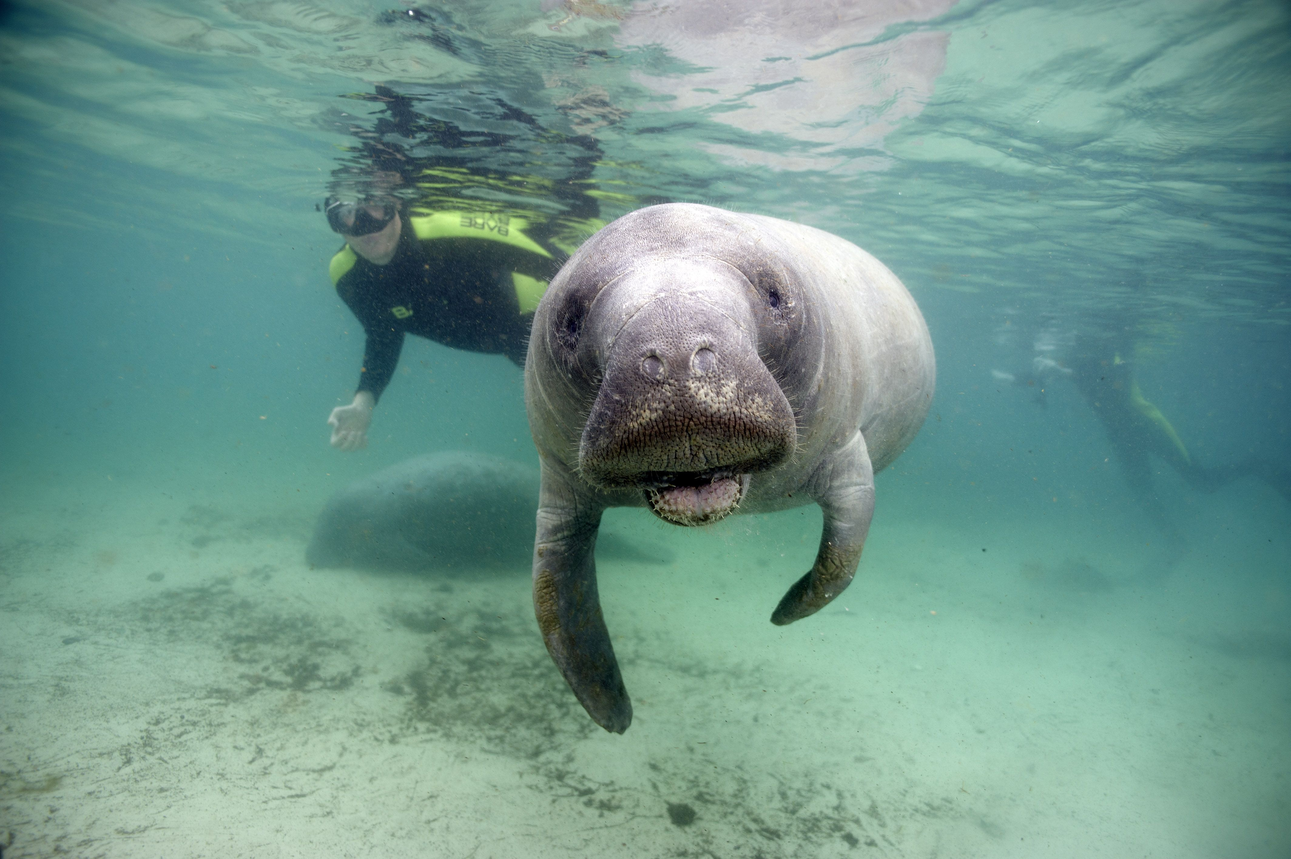 Cooler weather is coming & so are the manatees. Best