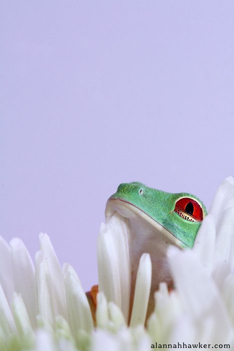 Frog and Petals by Alannah Hawker on 500px