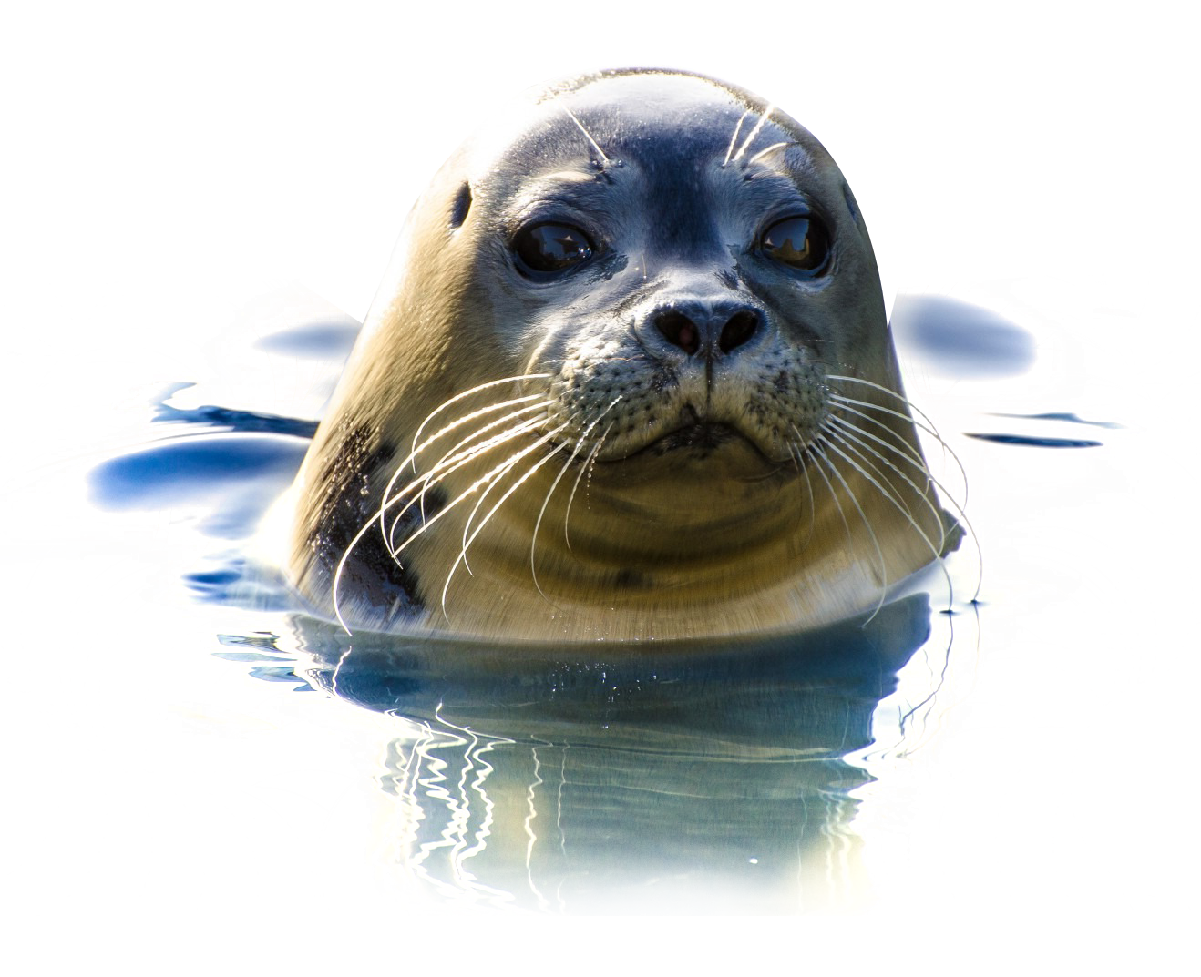 Seal Png Image Png Images Image Free Png