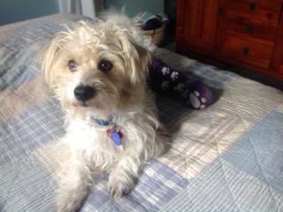 Gayweho Dogs 4 U On Dog Adoption Terrier Pets