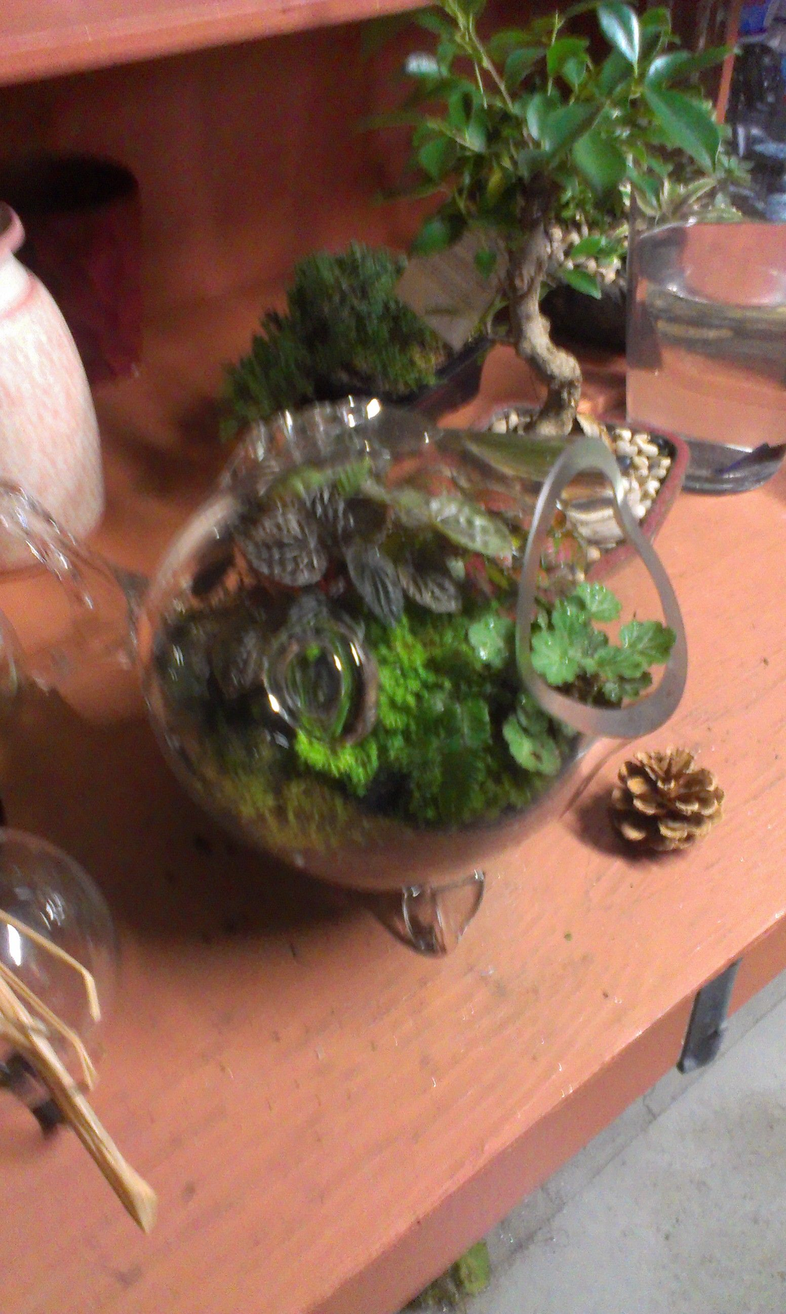 Here is one of Michaels signiture glass fish vases.  Yes, you may have seen them out there but NOT like you're seeing them here!  These plants were carefully selected for color and size and planted in a way that allows all the color to be viewed from any angle.  The mosses are hand cultivated by Michael himself and remember when watering: mist the soil with rainwater!  Yes, rainwater.