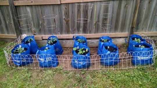 My Economical Vegetable Garden Reusable Walmart Bags 400 x 300