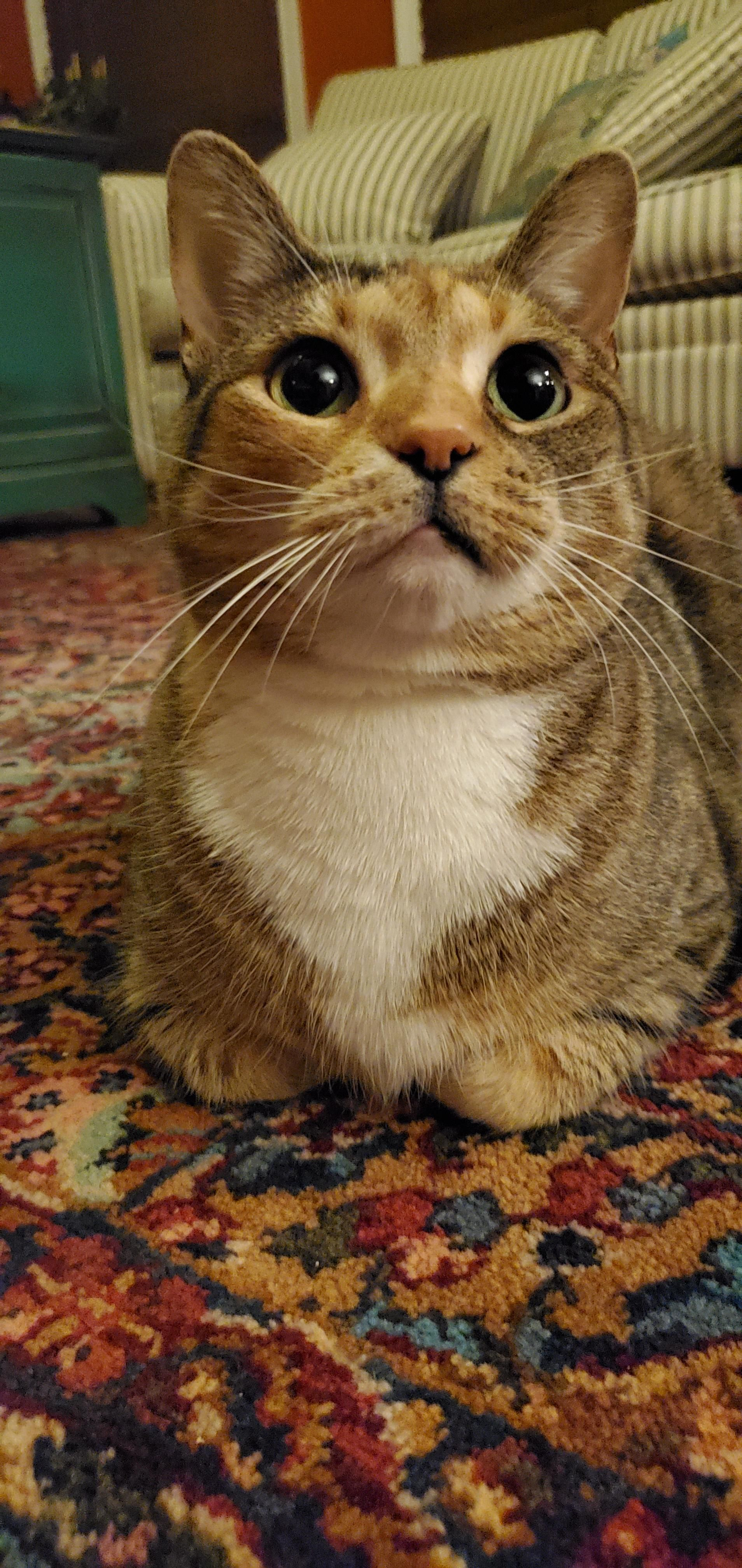 Get A Loaf Of Bertha Cute Animals Cute Funny Animals Cats Kittens