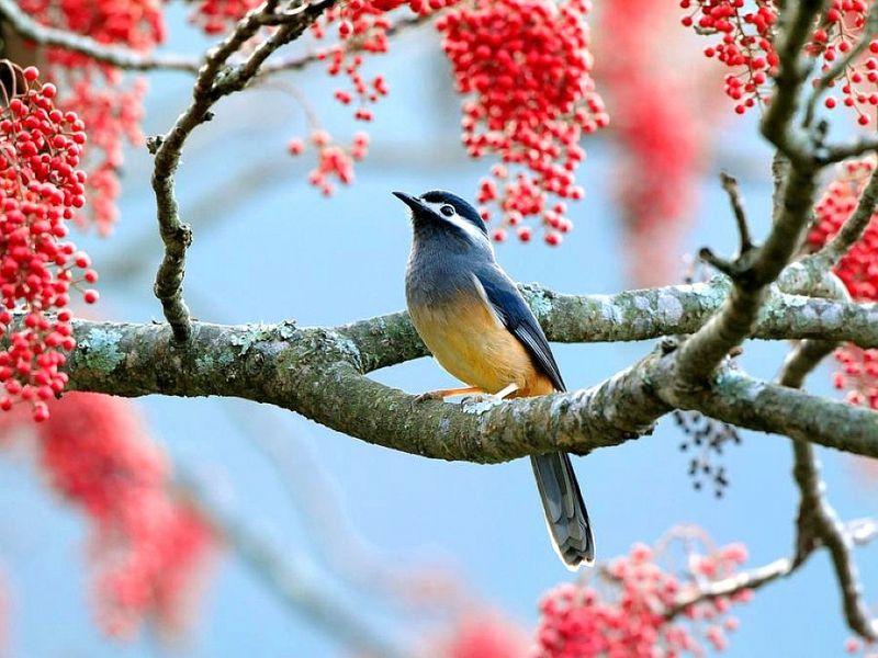 Beautiful Bird Colibri Bird Animals Birds Hd Desktop Wallpaper