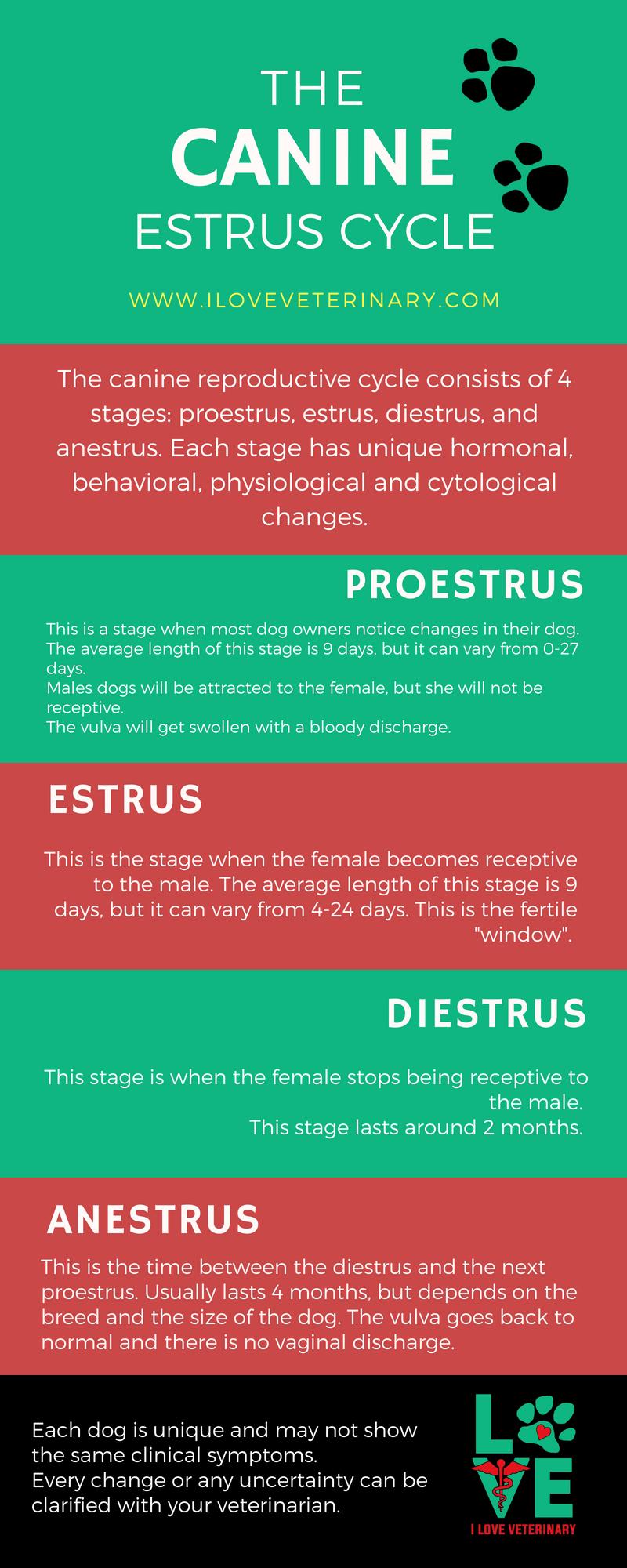 The Canine Estrus Cycle A Veterinary Infographic Vet Medicine Vet Tech Student Veterinary Tech