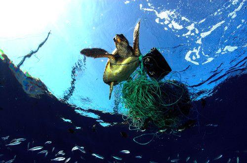 Plano de aula Reciclagem do lixo Quanto tempo o lixo dura no mar - marine biologist job description