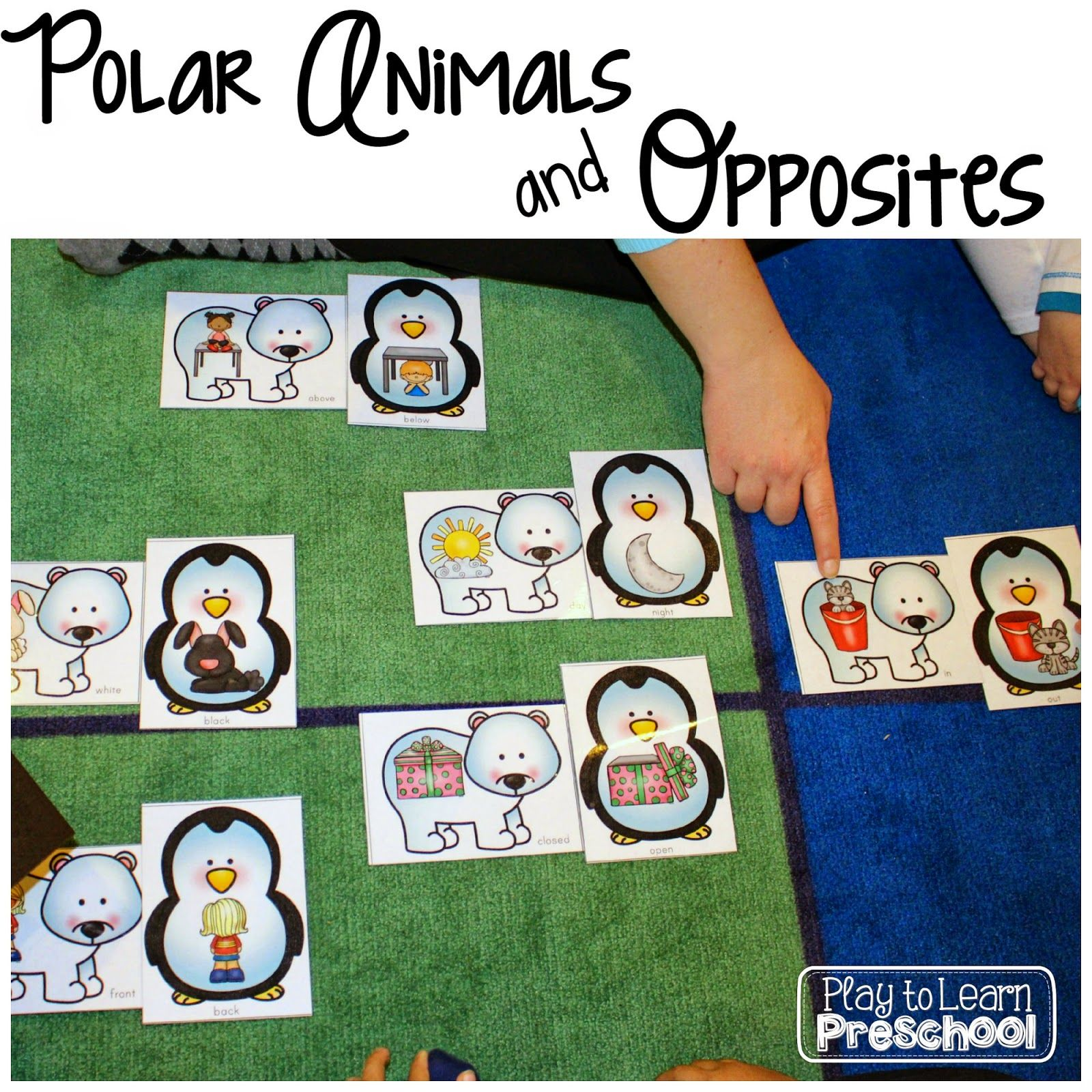 Polar Animals Unit