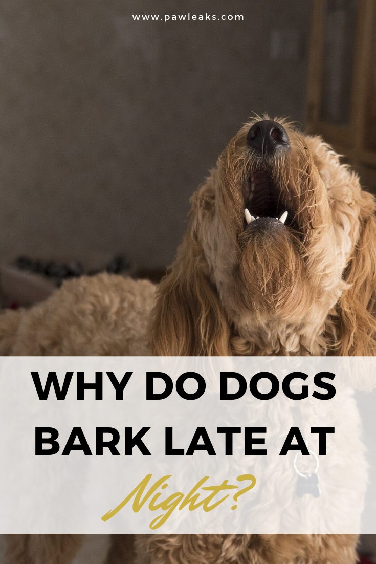 Why Do Dogs Bark At Night Pawleaks In 2020 Dog Barking At Night Dog Barking Dogs