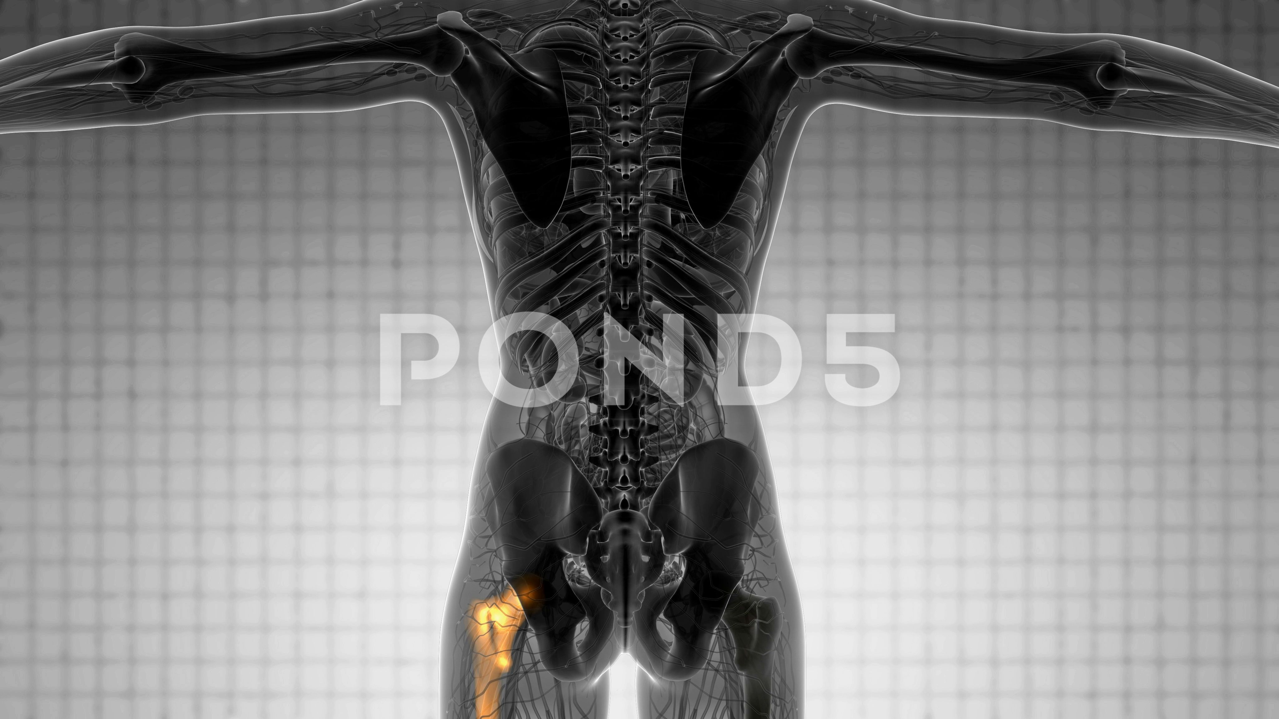 Hip bones anatomy medical scan stock footageanatomy