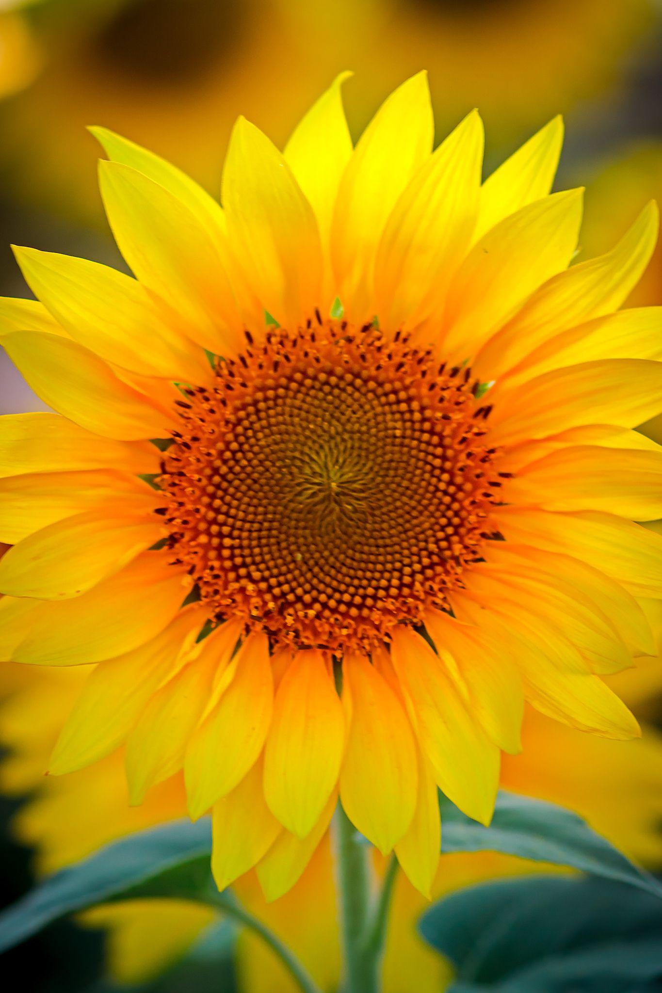 Sun Shine by William Colin  / 500px
